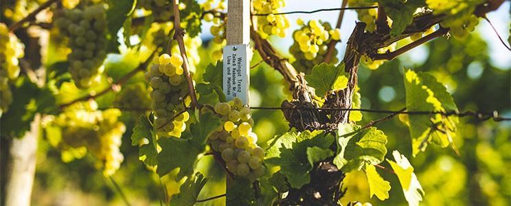 Weingut Sonneck