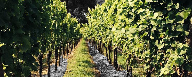 Weingut Weinwerk
