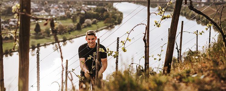 Weingut Burgkeller: Weißwein