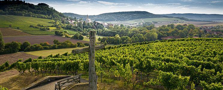 Weingut Castell: VDP.Erste Lage