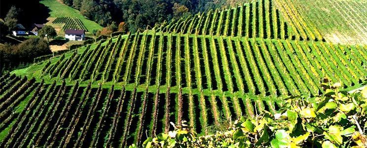 Weingut Decker