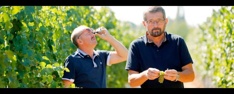 Weingut Edelhof Minges
