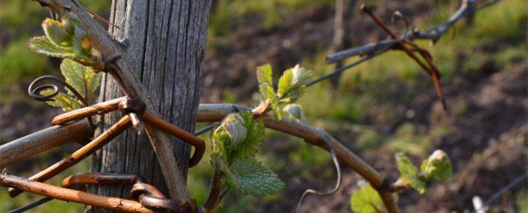 Weingut Erbes-Henn