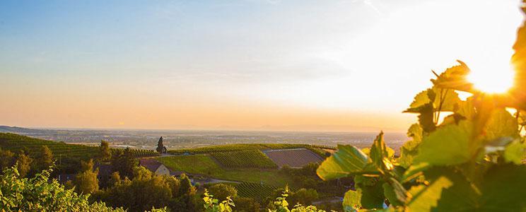 Weinmanufaktur Gengenbach