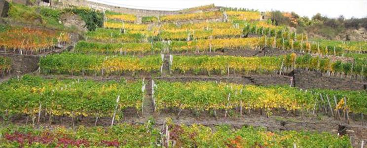 Weingut Försterhof: Ahrtaler Landwein