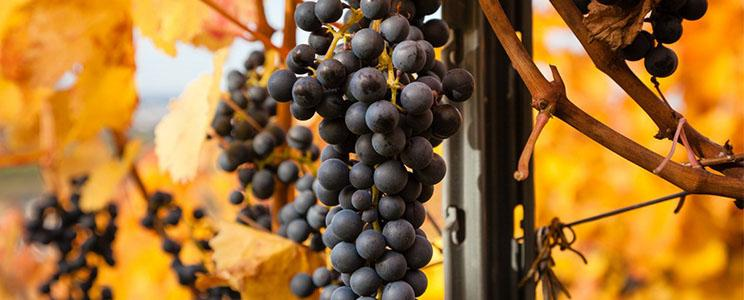 Weingut Häußer