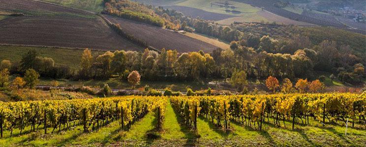 Weingut Hahnmühle