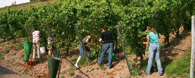 Weingut-Destillerie Harald Sailler