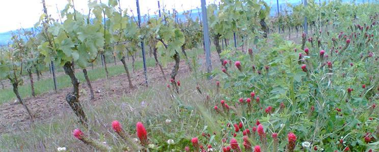 Weingut Huster: Rotwein