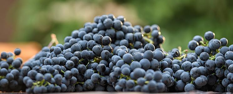 Weingut Julius