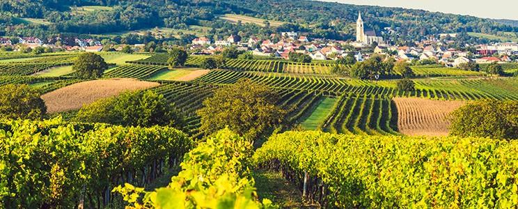 Weingut Kirchknopf: Edelstahltank