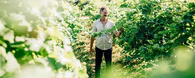 Weingut Harteneck: Qualitätswein