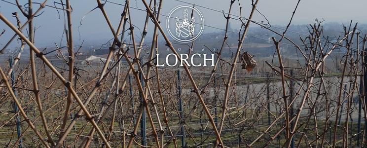 Weingut Thomas Lorch