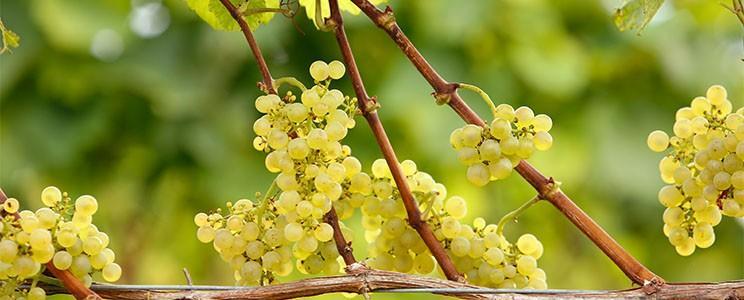 Weingut Wageck
