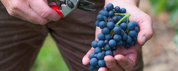 Weingut Reef: Rotwein
