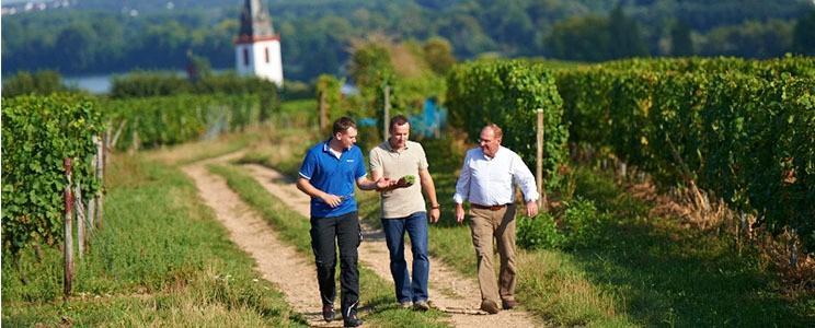 Weingut Heinz Nikolai