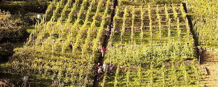 KSK Vintage Winery