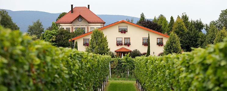 Weingut Villa Hochdörffer
