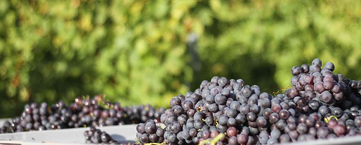 Weingut Nägele: Rotwein