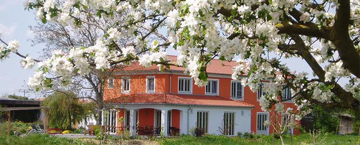 Weinhof am Nussbaum