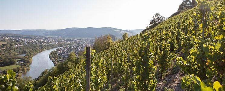 Weingut Peter Lauer: Auslese
