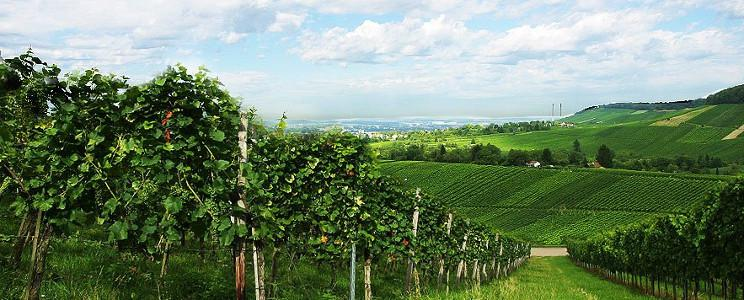 Weingut Kistenmacher-Hengerer