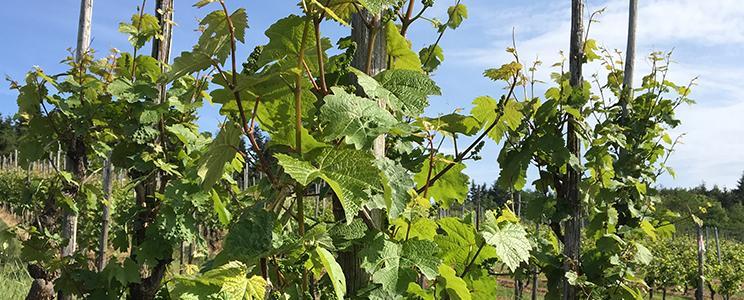 Weingut Piedmont