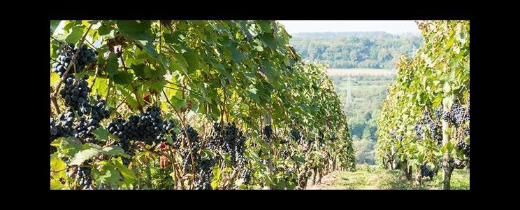 Weinbau Reichert