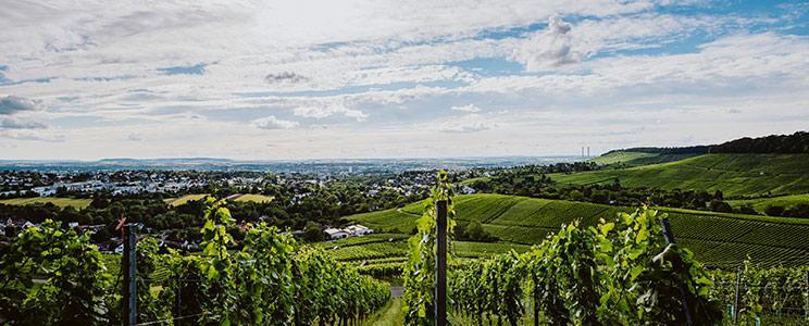 Ökologisches Weingut Schäfer-Heinrich: Spätburgunder