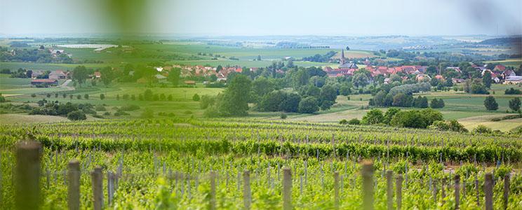 Weingut Schilling