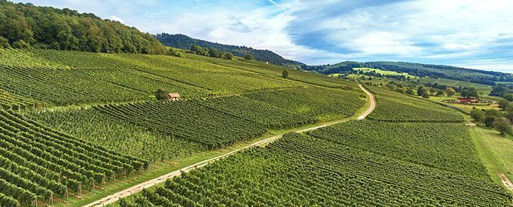 Privat-Weingut Schlumberger-Bernhart: 2020