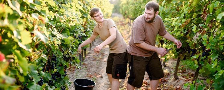 Weinbau Schreiber (Barfußwinzer)
