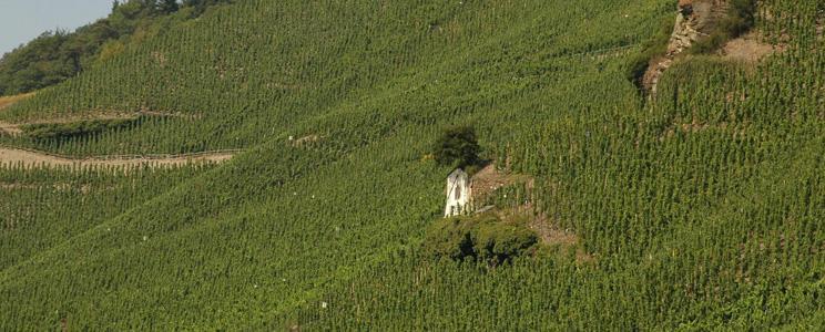 Weingut Studert-Prüm Maximinhof