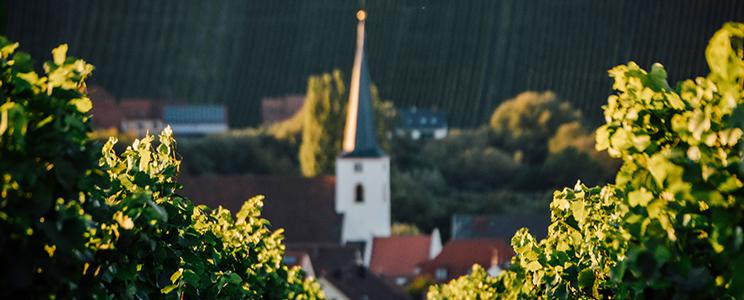 Divino Nordheim Thüngersheim