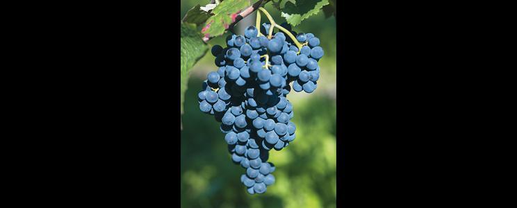 Dagernova Weinmanufaktur