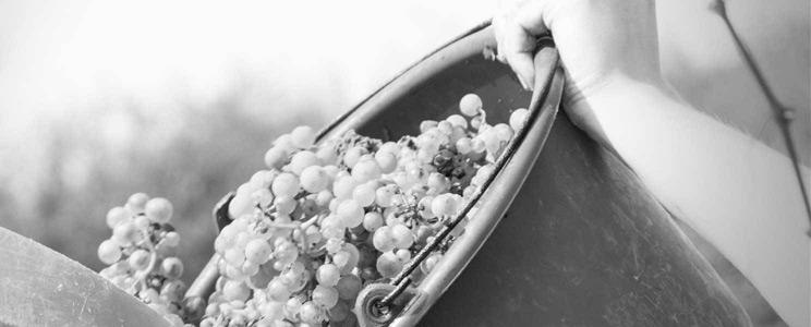 Weingut H.T. Eser: Riesling