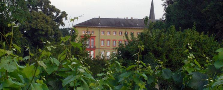 Weingut Wachter