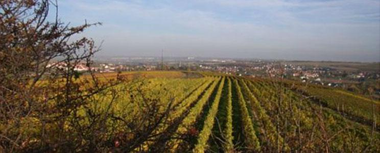 Weingut Walldorf