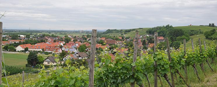 Wein & Hof Hügelheim: Weißwein