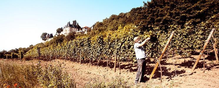 Weinbiet Manufaktur
