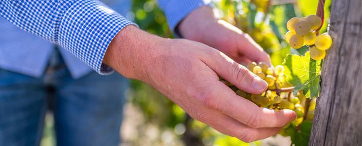 Weingut Mees: Weißwein
