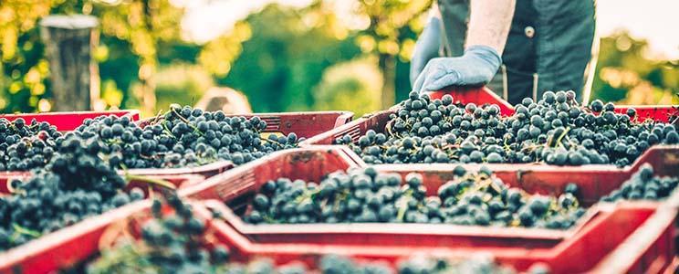 Weingut Volz: Qualitätswein
