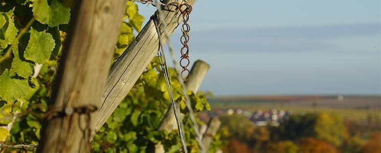 Weingut Werther Windisch