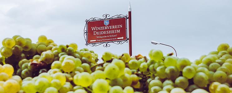 Winzerverein Deidesheim